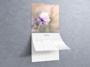 "12""x12"" Wall Calendar Mockups"